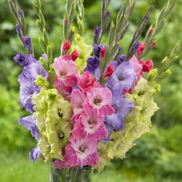 Цветочный этикет — какие цветы подарить девушке в зависимости от ситуации?2